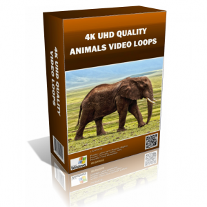 Animals 4K UHD Stock Video Pack