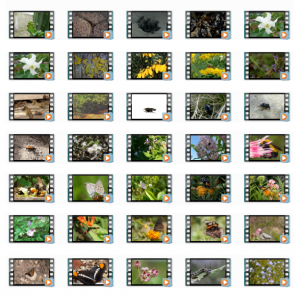 Insects 1080p HD Stock Videos
