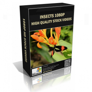 Insects 1080p HD Stock Video Pack